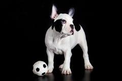 Psi francuskiego buldoga futbol na czarnym tło piłki nożnej sporta pojęciu Obrazy Stock