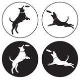 psi frisbee ilustracji