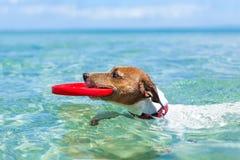 Psi frisbee Zdjęcia Stock