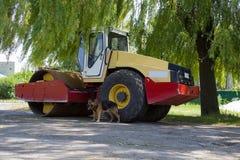 Psi i asfaltowy rolownik zdjęcia royalty free