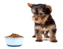 psi jedzenie Zdjęcie Stock