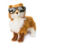 Psi jest ubranym Czarni okulary przeciwsłoneczni piękny zabawkarski pies na białym backgro Zdjęcia Royalty Free