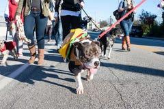 Psi Jest ubranym hamburgerów Kostiumowi spacery W Eklektycznej Atlanta paradzie Zdjęcia Royalty Free