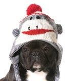 Psi jest ubranym kapelusz Zdjęcia Royalty Free