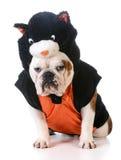 Psi jest ubranym kota kostium Zdjęcia Stock