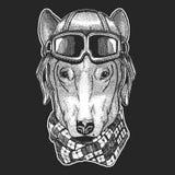 Psi jest ubranym lotnika kapelusz Druk dla dzieci odziewa, trójnik, koszulka Pilotowy dzikie zwierzę obraz stock