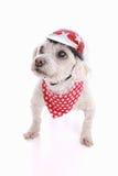 Psi jest ubranym roweru hełm, bandany i Obrazy Royalty Free