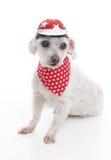 Psi jest ubranym roweru hełm, bandany i Fotografia Stock