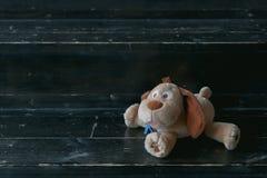Psi jest ubranym szkła i czytanie książka na drewnianej ławki starych pojęciach Zdjęcie Stock