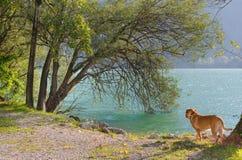 psi jezioro Zdjęcia Royalty Free
