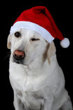 psi kapelusz s Santa Fotografia Royalty Free
