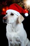 psi kapelusz s Santa Obrazy Royalty Free