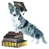 Psi kardigan Fotografia Stock
