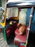Psi kierowca zdjęcia stock