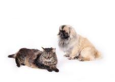 psi kocich przyjaciele Zdjęcia Stock