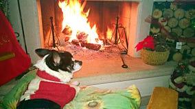 Psi komin Zdjęcie Royalty Free