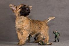 psi kopa terier Zdjęcia Stock