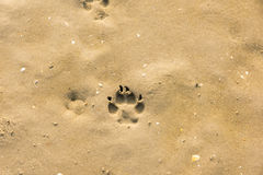 Psi ślad w piasku Zdjęcie Royalty Free