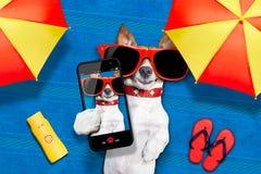 Psi lato plaży selfie Fotografia Royalty Free