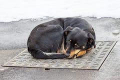 Psi lying on the beach na żelaznej dziury pokrywie w zima czasie Fotografia Stock