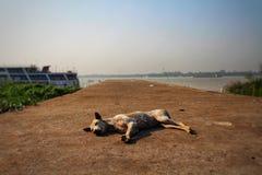 Psi lying on the beach na doku obraz royalty free