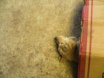 Psi lying on the beach w kartonie jako koc Obrazy Stock