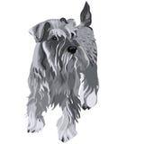 psi miniaturowego schnauzer wektor royalty ilustracja