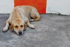 Psi nieatutowy mieszkanie na pod?odze zdjęcie stock