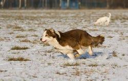 psi śnieg Fotografia Royalty Free