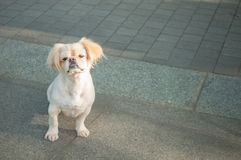 psi nieszczęśliwy Zdjęcie Stock