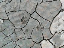 Psi nożny druk na krakingowej ziemi obraz royalty free