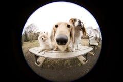 psi obsiadanie na ławce Obraz Stock