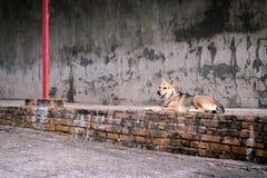 Psi obsiadanie na doku zdjęcie royalty free