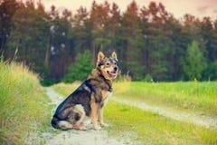 Psi obsiadanie na drodze gruntowej Zdjęcie Stock