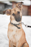 Psi obsiadanie na śniegu obraz royalty free