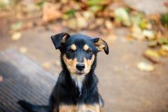 Psi obsiadanie w jesień jardzie Zdjęcie Stock