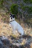 Psi obsiadanie w słońcu i trawie Fotografia Stock