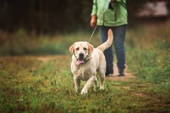Psi obsiadanie w spokojnym polu Fotografia Royalty Free