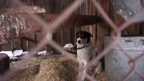 Psi obsiadanie w wolierze wieś zdjęcie wideo