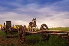 psi obszar trawiasty Obrazy Royalty Free
