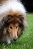 psi obwąchanie Obraz Royalty Free