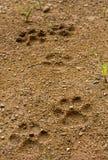Psi odcisk stopy na miękkiej części ziemi Zdjęcia Stock