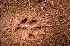 Psi odcisk stopy na miękkiej części ziemi ziemi Zdjęcia Stock