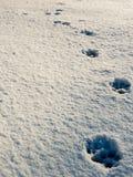 Psi odcisk stopy w świeżym śniegu w Fontecerro Rieti Włochy zdjęcie stock