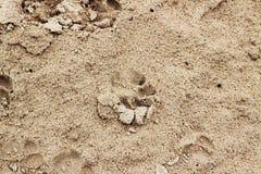 Psi odciski stopy na brown piaskowatej plaży outdoors Zdjęcie Royalty Free