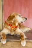 Psi odpoczywać Zdjęcia Royalty Free