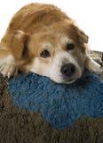 Psi odpoczywać. Obrazy Royalty Free