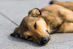 Psi odpoczywać Zdjęcie Royalty Free