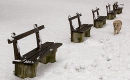 Psi odprowadzenie na śniegu Obrazy Stock