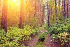 Psi odprowadzenie w lesie Zdjęcia Stock